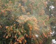 花粉症の治療は早めにすると鼻づまりや目のかゆみが軽減