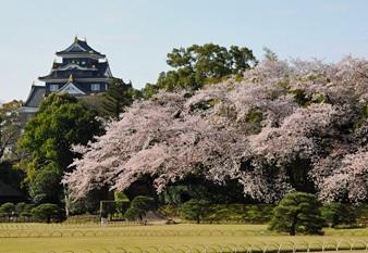 後楽園の桜と城