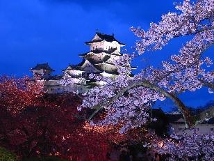 城とさくら(ライトアップ)