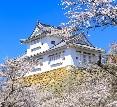 津山 さくらまつり 鶴山公園(岡山県)