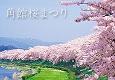秋田 角館の桜まつり見ごろとライトアップ