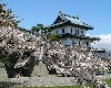 松前公園桜まつりの時期とライトアップ