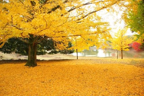 大仏池と黄葉