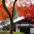 秋月城跡周辺の紅葉と城下町散策