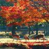 奈良公園の紅葉は穴場スポット