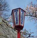 盛岡さくらまつり|高松公園の桜