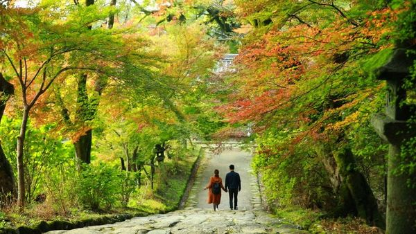 秋月城跡周辺の紅葉は黒門周辺が見どころ