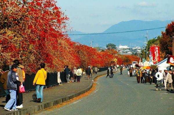 久留米 柳坂ハゼ祭り開催期間とアクセス 永勝寺の紅葉