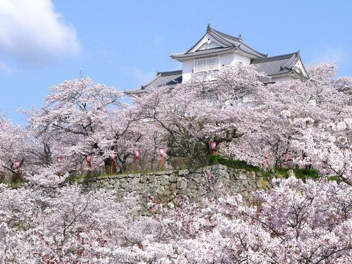 岡山・津山の鶴山城さくらまつりと花見の時期