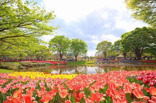 フラワーフェスティバル2018・まんパク2018国営昭和記念公園